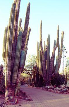 Desert Botanical Garden \\// Phoenix, AZ