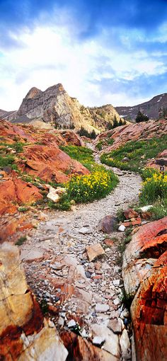 Trail to Sundial Peak, Utah...I would love to be walking down this trail