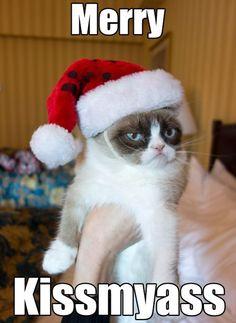 grumpi cat, grumpy kitty, sauc, happy holidays, baby cats, meme, christma, grumpy cats, the holiday