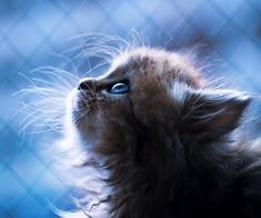 The Cutest Little Kitten in the World - My Modern Metropolis