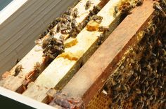méhkaptár belseje