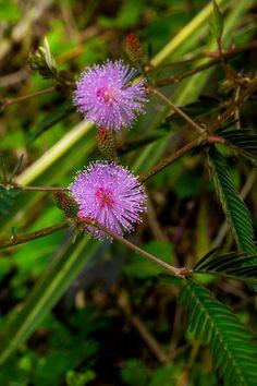 Beautiful flower, Saba - Dutch Caribbean - Photo Credit: Laurent Benoit - www.sabatourism.com