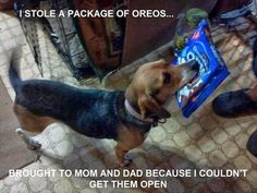 Reminds me of Dixie: the dog who ate an entire pack of Oreos.