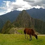 Machu Picchu and a Llama - What could be more peaceful!