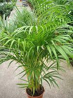 Plantas y flores: Plantas de interior fáciles