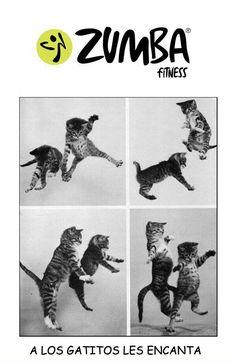 Zumba fitness - LOL!