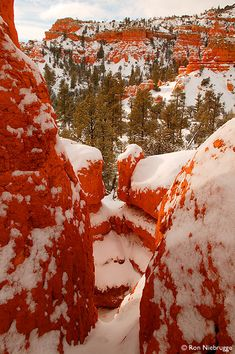 Dixie National Forest, Utah - blanketed with snow.