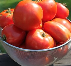 5 Simple Tips To Grow Great Tomatoes!