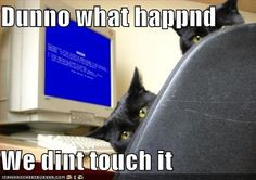 computers, anim, funny pics, funni, black cats, screens, funny photos, kitty, blues