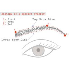 Trim your Brows by Lien Bui - How To   PRIMPED
