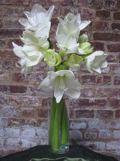 """Read: """"5 Vases Every DIY Floral Designer Must Have""""     Image: www.flymetothemoonflorists.com #floral arangements #flowers #amaryllis #flymetothemoonflorists"""