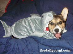 AHHHHHHHH! I'm eaten by the vicious shark>