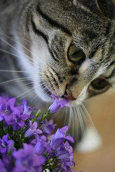 Take time to smell the flowers... #cats #eyes