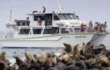 Wildlife Viewing | Categories | Phillip Island