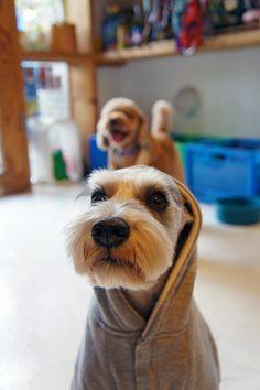 I would jog to the gym.                     Jack: the Wonder Dog