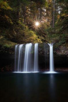 Forest falls. www.dogwoodalliance.org