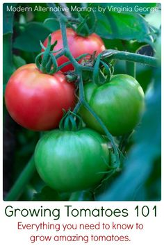 The Mother of All Tomato Posts   Everything you need to know about how to grow tomatoes.   Virginia George