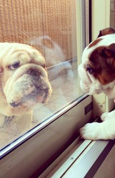 World of Bulldog what are you doing out there..