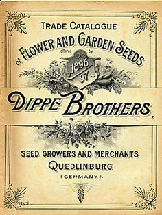 Catalog Information    Company Name:  Dippe Brothers    Catalog Title:  Trade Catalogue of Flower and Garden Seeds (1896)  Publication Information:  Quedlinburg, Germany  Category(ies) of Cover Art:  Floral Design - Decorative  Roses