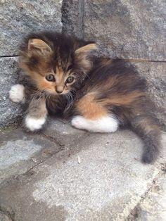 Little Calico baby.