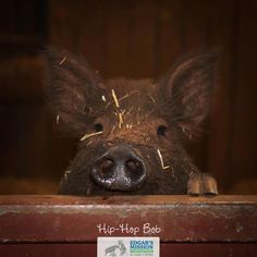 As happy as a pig in mud...
