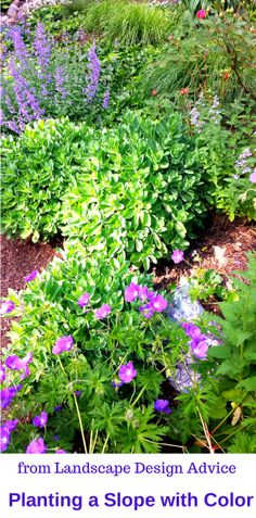Great ideas on how to plant a slope, especially with color! Visit http://www.landscape-design-advice.com/landscaping-steep-slopes.html