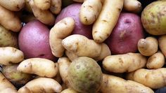 Organic Gardening  How to grow potatoes // Swede Cottage Farm //