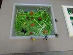 bug sensori, bug classroom, drawings, bugs, sensory boxes, sensori tray, educ, bunch, classroom activ