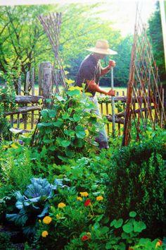 Lovely veg garden.
