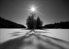 #sun #forest #winter