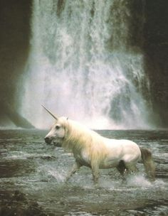 we're here in banff and see a unniiicorn. we thought unniicorn was extinct