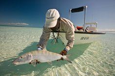 One of the best Bonefish shots ever by Matt Harris fli fishin, bonefish shot, saltwat fish, bucket list, bones, fish photographi, bone fish, fish bucket, fishing