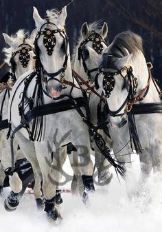 Beautiful ... Equine love