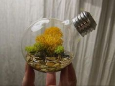 decorative plants from old light bulbs 15