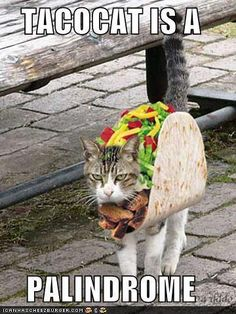 TACOCAT is a palindrome. Can't. Stop. Laughing.