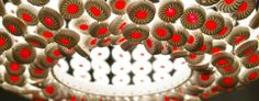 Light Snack- chandelier made out of ceramic Jammy Dodgers, by Rebecca Wilson.