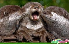 Otter kiss :)