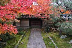 Kyoto Autumn leaves   yohey yamagata