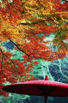 Red Parasol, Japan