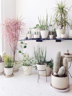 plants in white ceramic pots