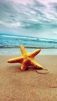 # starfish, #Nature