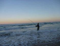 fraserislandfish homeoffish