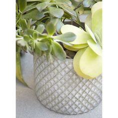 Bataan Planters in Gardening I Crate and Barrel