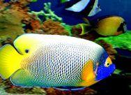Sick Fish Treatments   Marine Life News