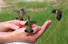 I would love to hand feed a hummingbird!  Five Steps to Feeding Hummingbirds in Your Hand | Birds & Blooms