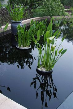 Constructing and Caring for Container Water Gardens - Successful Container Gardens - University of Illinois Extension