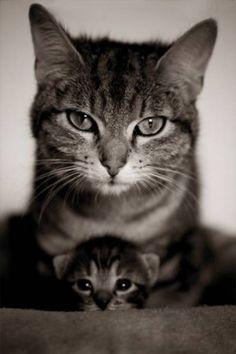 Cat mum