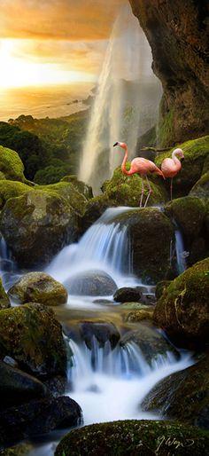 Flamingos and waterfall
