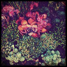 Succulent garden, Southern CA