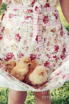 Little Chicks Print By Stephanie Frey